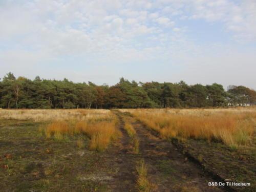 Doorwerthse Heide