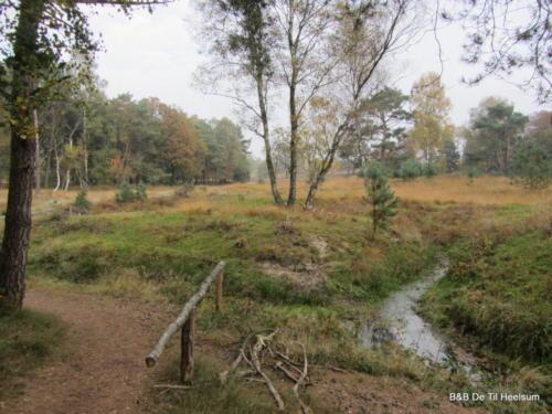 Beken op Wolfhezer Heide