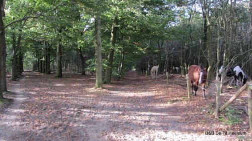 noordberg IMG_6686 paarden